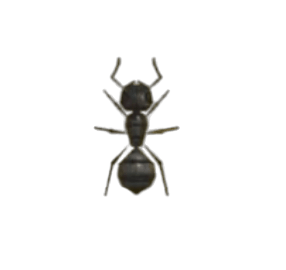 Ant - Animal Crossing: New Horizons Insect Guide