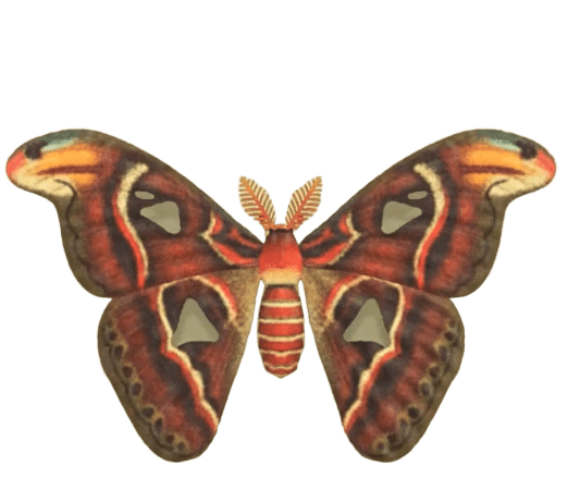 Atlas Moth - Animal Crossing: New Horizons Insect Guide