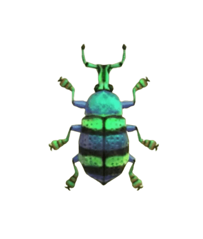 Blue Weevil Beetle - Animal Crossing: New Horizons Insect Guide