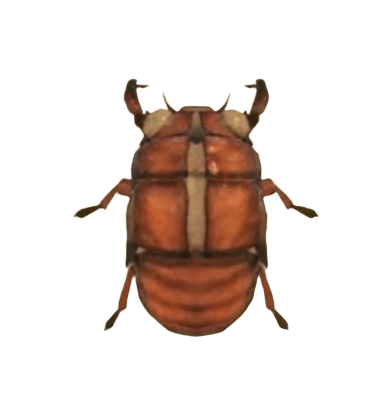 Cicada Shell - Animal Crossing: New Horizons Insect Guide