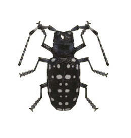 Citrus Long-horned Beetle - Animal Crossing: New Horizons Insect Guide