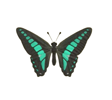 Common Bluebottle - Animal Crossing: New Horizons Insect Guide