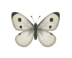 Common Butterfly - Animal Crossing: New Horizons Insect Guide