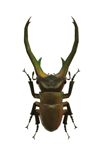Cyclommatus Stag - Animal Crossing: New Horizons Insect Guide