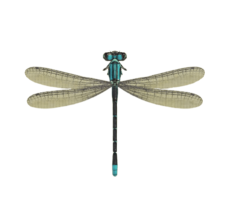 Damselfly - Animal Crossing: New Horizons Insect Guide