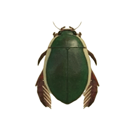 Diving Beetle - Animal Crossing: New Horizons Insect Guide