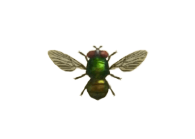 Fly - Animal Crossing: New Horizons Insect Guide