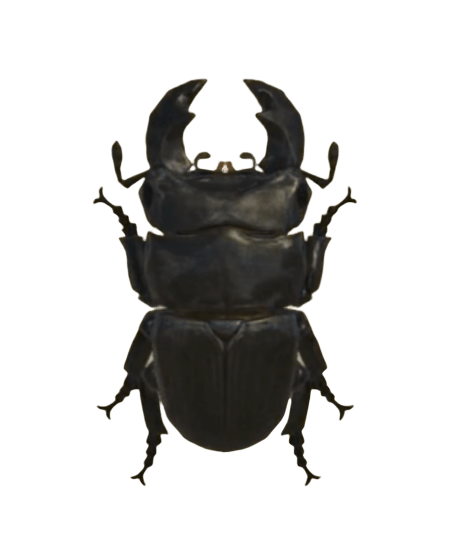 Giant Stag - Animal Crossing: New Horizons Insect Guide
