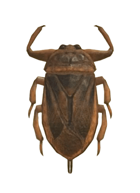 Giant Water Bug - Animal Crossing: New Horizons Insect Guide