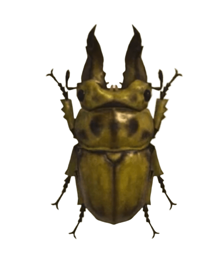 Golden Stag - Animal Crossing: New Horizons Insect Guide