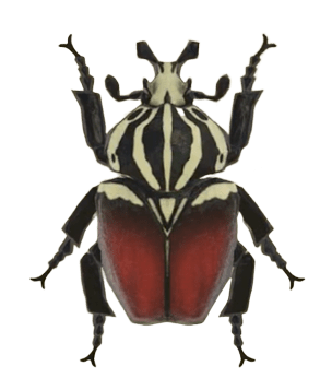 Goliath Beetle - Animal Crossing: New Horizons Insect Guide