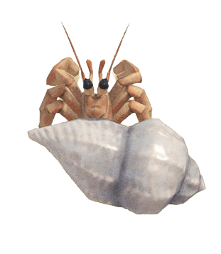 Hermit Crab - Animal Crossing: New Horizons Insect Guide