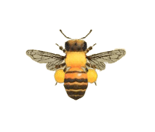 Honeybee - Animal Crossing: New Horizons Insect Guide