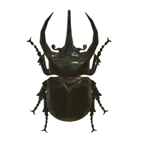 Horned Atlas - Animal Crossing: New Horizons Insect Guide