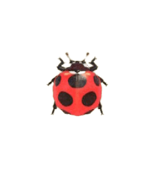 Ladybug - Animal Crossing: New Horizons Insect Guide