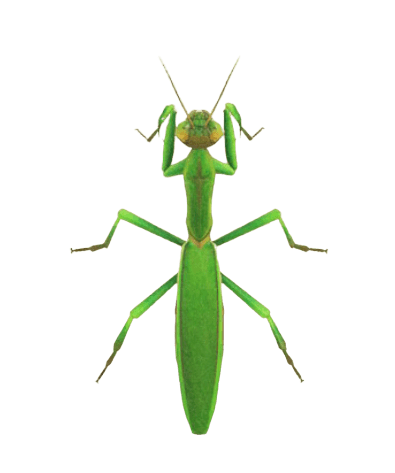 Mantis - Animal Crossing: New Horizons Insect Guide