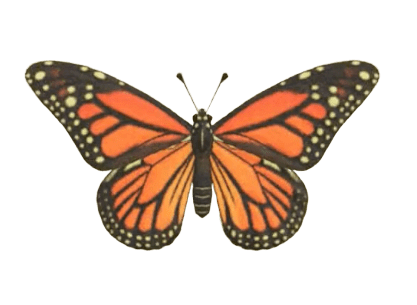 Monarch Butterfly - Animal Crossing: New Horizons Insect Guide