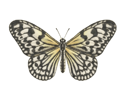 Paper Kite Butterfly - Animal Crossing: New Horizons Insect Guide