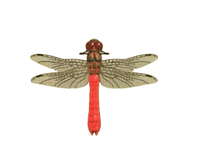 Red Dragonfly - Animal Crossing: New Horizons Insect Guide