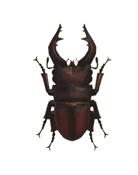 Saw Stag - Animal Crossing: New Horizons Insect Guide
