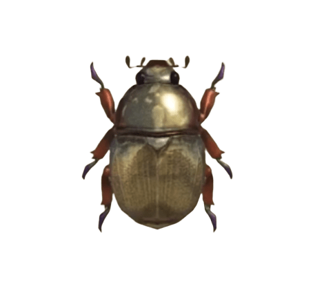 Scarab Beetle - Animal Crossing: New Horizons Insect Guide