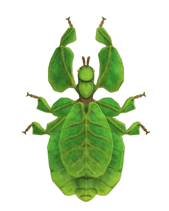 Walking Leaf - Animal Crossing: New Horizons Insect Guide