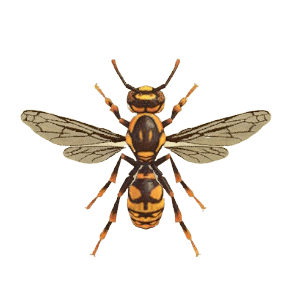 Wasp - Animal Crossing: New Horizons Insect Guide